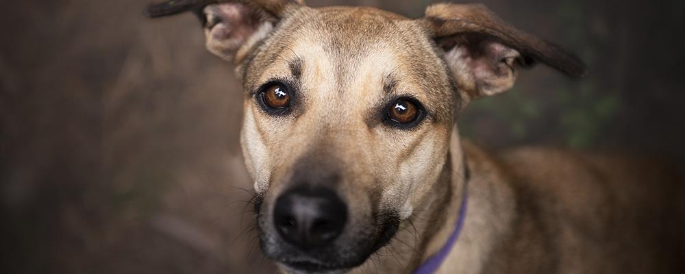 Adopté un perro de la calle ¿Qué hago?
